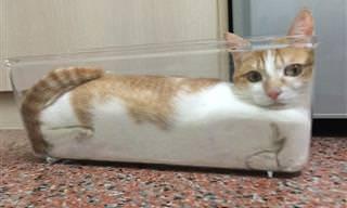 Gatos Líquidos Existem, e é o Que Você Vai Ver Agora!