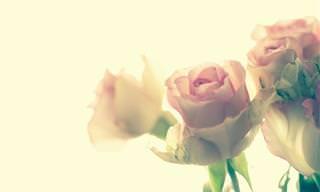 A Parábola da Rosa