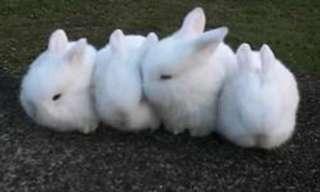 COELHINHOS! Apenas Adoráveis Coelhinhos!