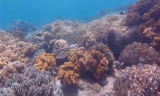 Faça um mergulho nas águas cristalinas das Filipinas!