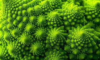 A Surreal Beleza De Plantas Exóticas