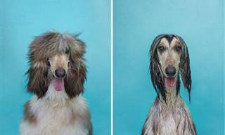 Cachorros Antes e Depois do Banho!