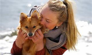 Hora do Teste: Você Sabe Tudo Sobre Cachorros?