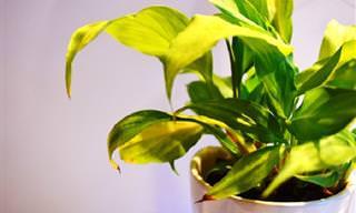 6 Sinais Das Plantas Para Te Falar Que Algo Está Acontecendo!