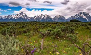 Faça um passeio pelo belo Parque Nacional Grand Teton em 8k!