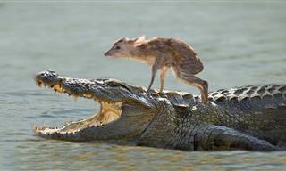 Incrível! Esses animais são verdadeiros heróis!