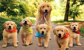 Retratos de Lindas Famílias Caninas