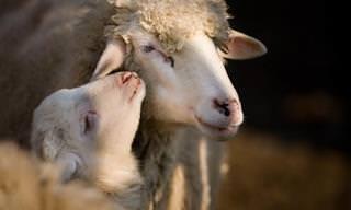 Animais Que Demonstram Seu Amor Melhor Que os Humanos