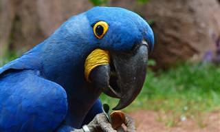 Piada do Dia: Afogando o Papagaio