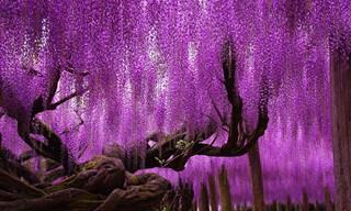 Estas Árvores São Pura Obra de Arte