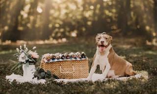 A orgulhosa mamãe pitbull mostra seus adoráveis filhotes