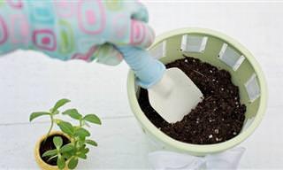 Os 10 Vegetais Mais Fáceis de Cultivar em Casa