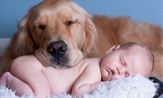 Ternura: Crianças e Cães Dormem Juntos