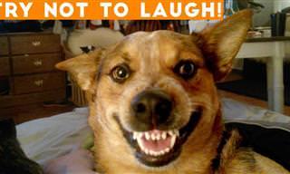 Video : Animais hilariantes para alegrar seu dia