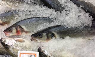 Saiba Por Que Esses 9 Peixes Não São Bons Para Consumo