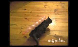 Gatos fazendo gatices...