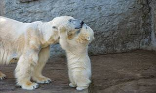 25 Filhotes de Ursos Fofos e Suas Mamães Cuidadosas!