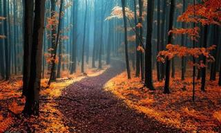 28 Deslumbrantes Caminhos Pela Floresta Que Não Parecem Reais