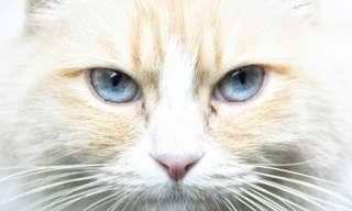 Piada: Como seriam os diários dos nossos pets?