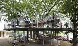 Arquitetura Que Respeita As Árvores