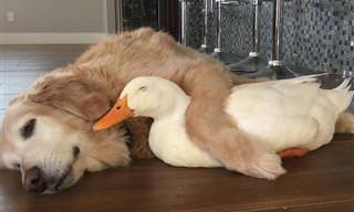 Rudy e Barclay, uma amizade surpreendente