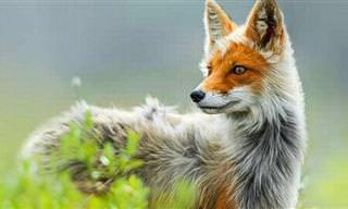 Fotos Inéditas e Impressionantes do Mundo Selvagem