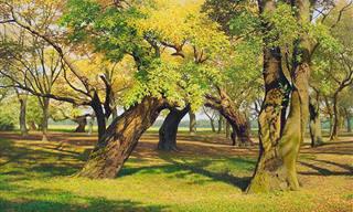 A Arte e a Natureza em Harmonia Nessas Lindas Obras!