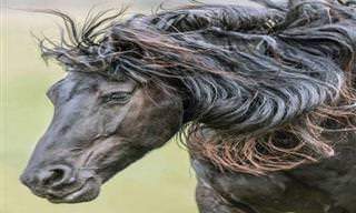 Lindas Imagens de Cavalo de Tirar o Fôlego!