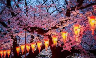 A Beleza Incomparável do Japão na Primavera