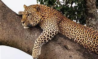 Os 8 Melhores Lugares do Mundo Para Ver a Vida Selvagem