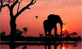 A Natureza Espelhada - Magnífica e Surreal