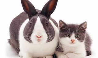 Esses Animais Poderiam Ser Gêmeos Se Eles Fossem da Mesma Espécie!