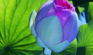 Pare Para Admirar Estas Belas e Exóticas Flores
