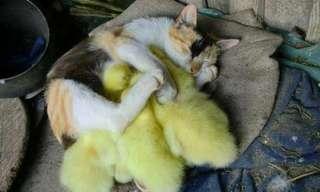 Porque Eu Gosto de Gatos...