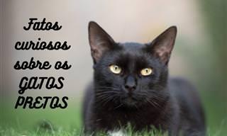 10 Fatos e curiosidades sobre os gatos pretos