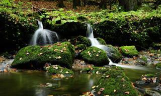 Os Presentes Que a Natureza Nos Dá