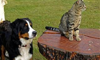 Estes Sinais Indicam Que o Seu Animal Está Doente!