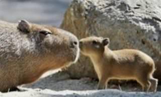 O amor das mães pelos seus filhotes sempre é lindo de ver