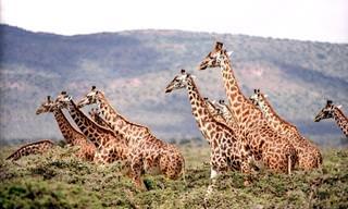 Assista a mais bela filmagem feita na África!