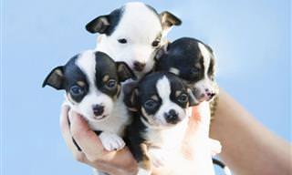 23 das Mais Belas Fotos de Filhotes de Cães Superfofos!