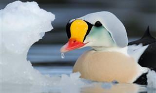 Belas Fotografias de Aves