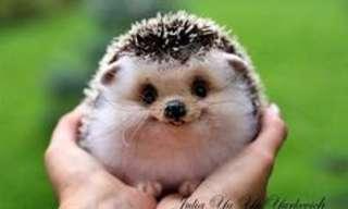 Esses Adoráveis Hedgehogs...