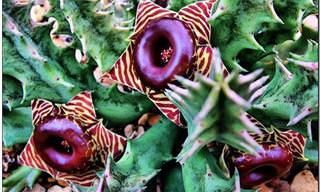Belíssimas Flores Coloridas e Exóticas!