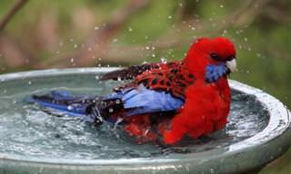Conheça alguns bichos fofos da Austrália