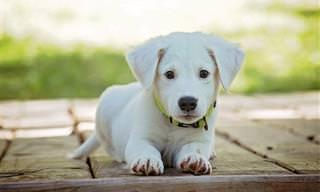 Os cães são simplesmente surpreendentes e até podem falar...