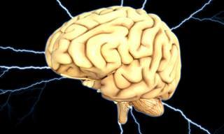 TESTE: O Que Você Sabe Sobre o Cérebro Humano?