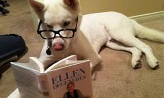 Os Cães Mais Humanos Que Você já Viu!