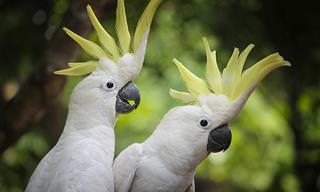 Os Grandes Pássaros Dançarinos: Jerry e Marco