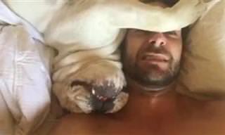 21 Cães Sem Noção Que Invadem o Espaço dos Outros