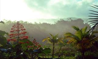 Guiana: Um Paraíso Verde e Exótico na Costa Caribenha